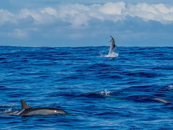 photographie par Gko Prod faune reunion dauphin ocean indien