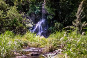 photographie par Gko Prod Reunion bassin tourisme flore cascade