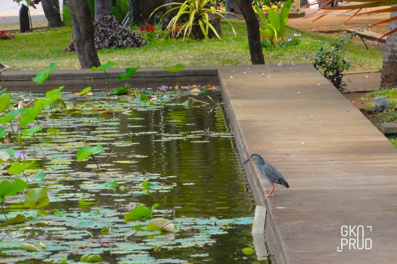 bassin et héron nénuphar du jardin de l'Etat visite virtuelle